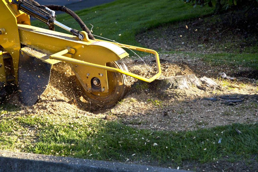 A stump grinder grinding a stump in Tallahassee, FL