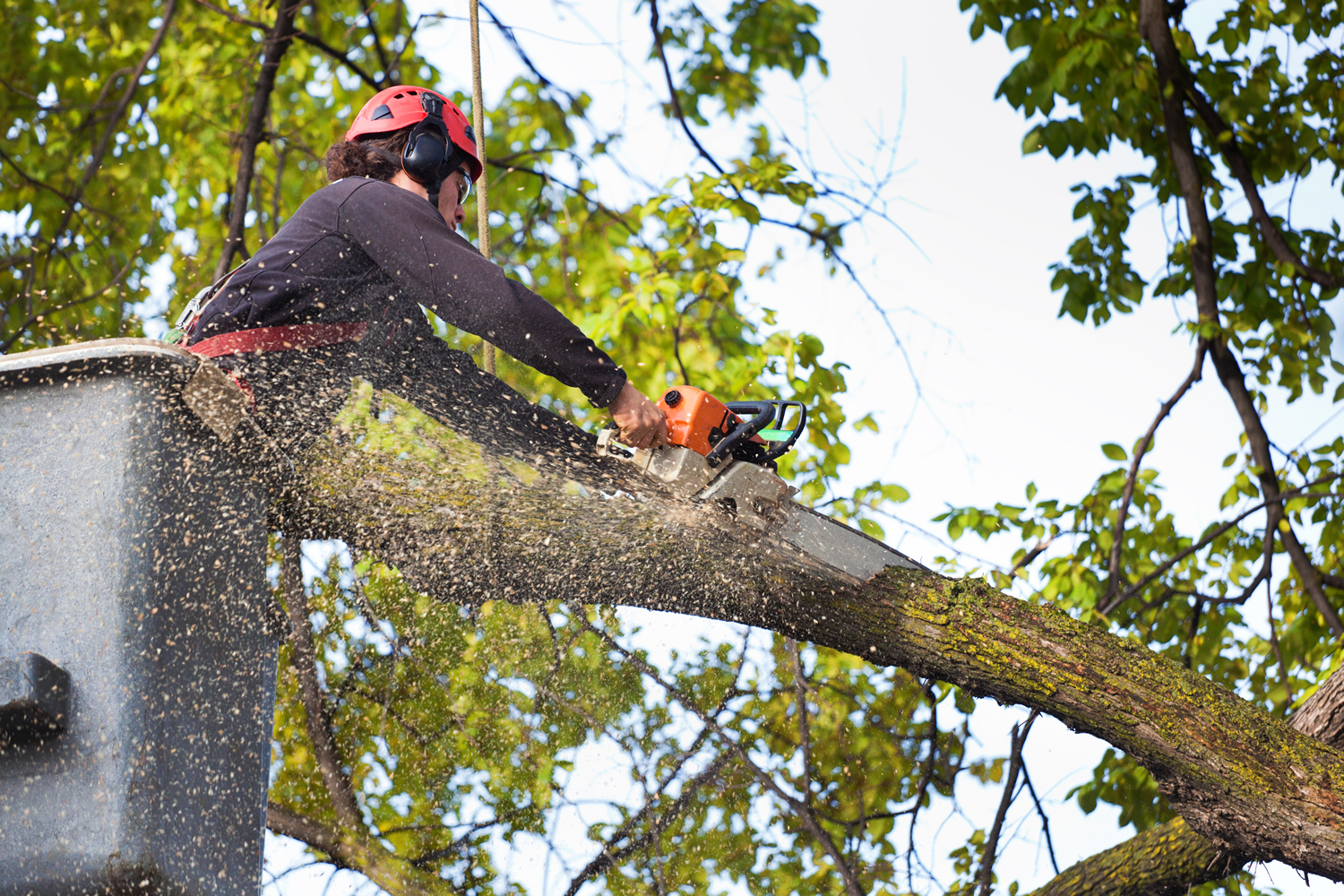 Crew member from a tree service in Tallahassee trimming a branch
